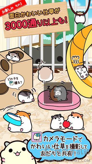 仓鼠收集游戏官方iOS版图5: