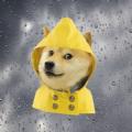 单身狗天气弹幕版app手机版下载 v1.0