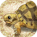 治愈的海龟育成游戏