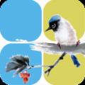 小鸟记账手机版下载软件app v1.1.3