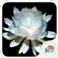 3D月下美人梦象动态壁纸手机版app下载 v1.4.13
