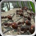蚂蚁模拟器汉化中文版(Ant Simulator 3D) v2.5.2