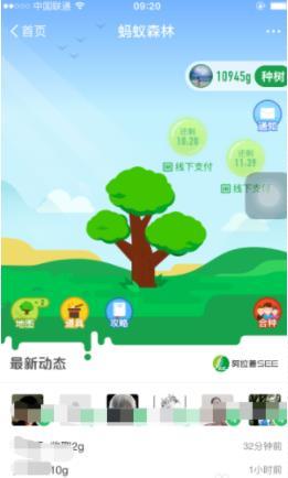 支付宝蚂蚁森林怎么合种树?蚂蚁森林合种树方法介绍[多图]