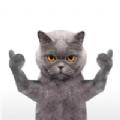 英短蓝猫表情包gif动图