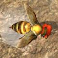 蜂巢模拟器3D游戏