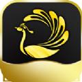 孔雀平台做任务app官方版 v1.0