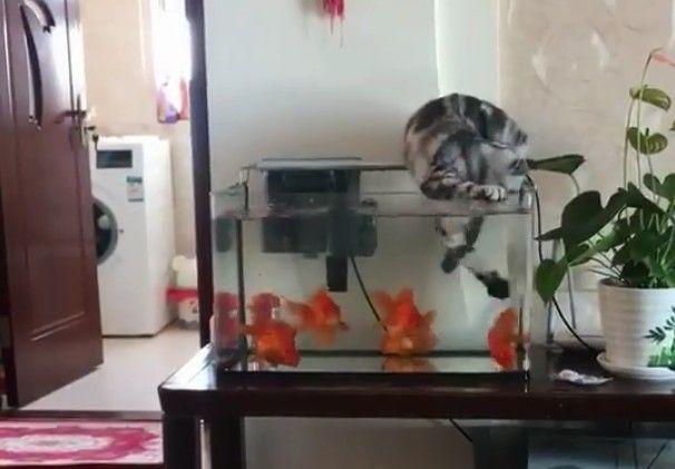 抖音吃个鱼可太难了出处是哪里 吃个鱼可太难了高清表情图大全[多图]
