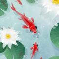 鱼戏荷塘红包赚钱福利版 v1.0.0