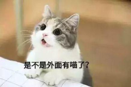 抖音三只猫点头动图gif表情包分享图片1