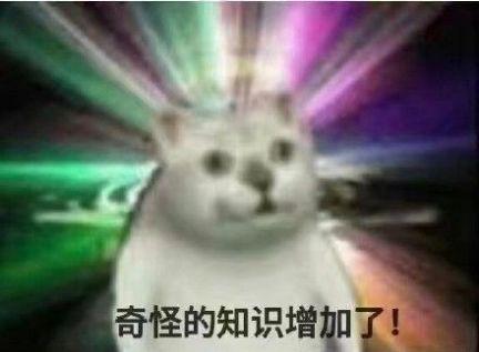 抖音三只猫点头动图gif表情包分享图3:
