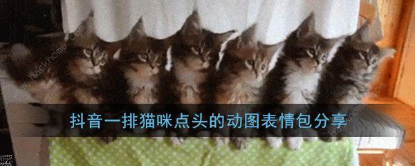 抖音一排猫咪点头gif原图 三只猫点头表情包高清分享[多图]图片1