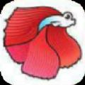 鬥魚快訊app