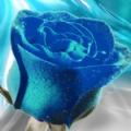 蓝色妖姬app软件下载 v1.0