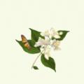 淡雅的茉莉花app软件下载 v1.0