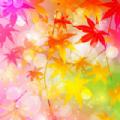 苹果原生态枫叶壁纸 高清版 手机 唯美大全大图app下载 v1.0