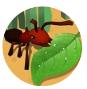 蚂蚁进化3d游戏