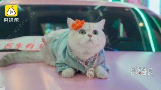 微博猫咪也能当车模? 出场费上万超敬业[多图]图片4