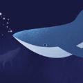 鯨遇app安卓軟件 v1.0