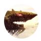 巨鲲传说游戏下载红包版 v1.0